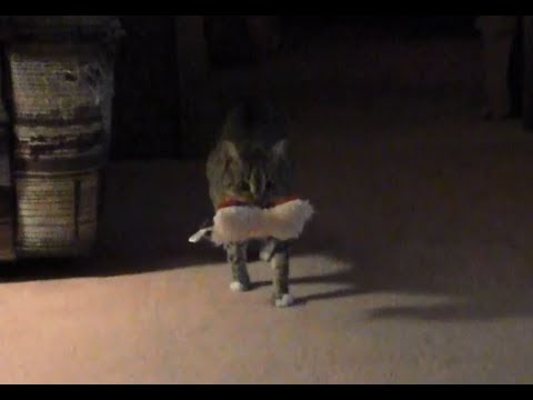 I'm a little sick, so no tutorial this week, just my cat playing fetch...