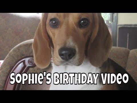 Sophie (the beagle) Birthday Video