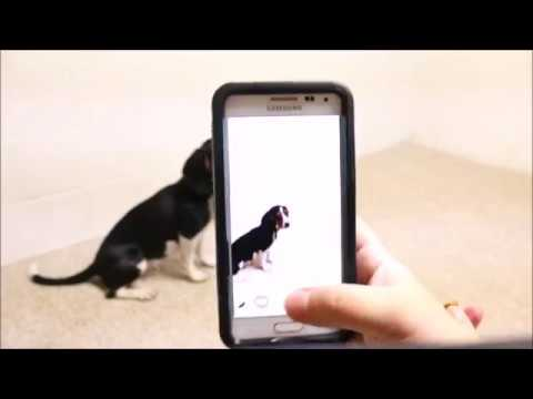 How to Get a Dog to Look at a Camera