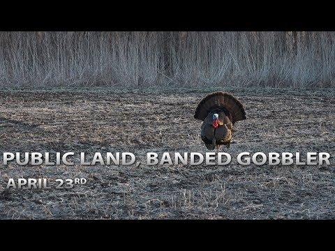Public Land Tom, Banded Gobbler!   Spring Thunder