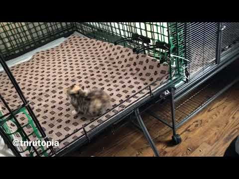Transferring a Feral Cat from a Trap to a Feral Cat Den