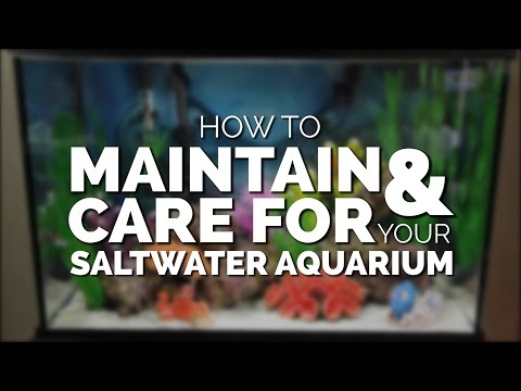 How To Maintain & Care For Your Basic Saltwater Aquarium