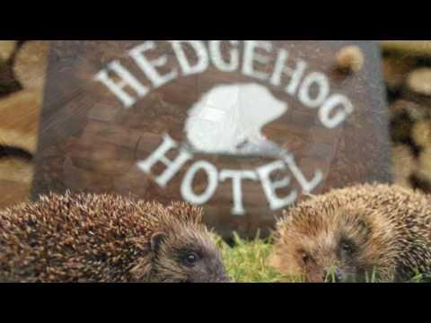 Wildlife Garden Project - Part 3 - Saving Woodland & Hedgehog Habitat No.2