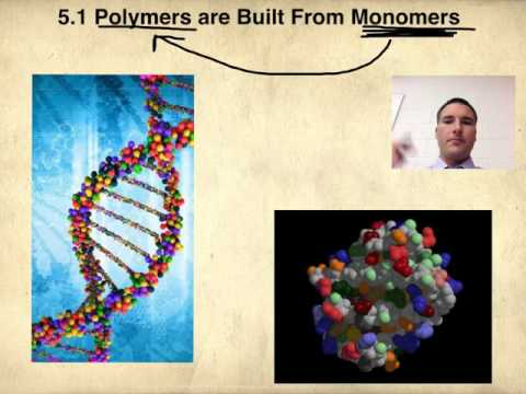 5 1 Macromolecules are polymers, built from monomers