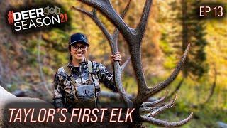 Taylor Drury's First Elk Ever, Giant Bulls Screaming At 5 Yards   Deer Season 21