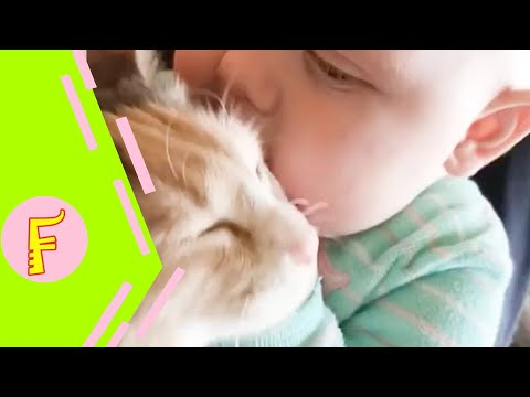 Xxx Mp4 Baby And Cat Fun And Fails Funny Baby Video 3gp Sex
