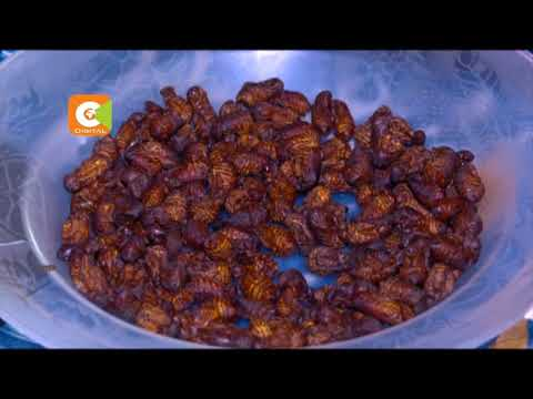 SILK FARMING : Makueni residents turn to silkworm farming