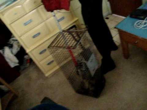 Raccoon gave birth in a closet
