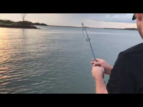 Jacobs Well - Jumping Pin Night Fish