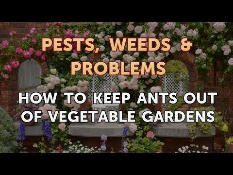 How to Keep Ants Out of Vegetable Gardens