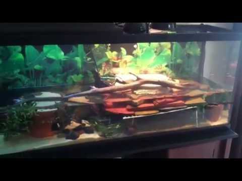 *NEW* Turtle Habitat for a 55 Gallon Tank - Hatchling & Juvenile Turtles