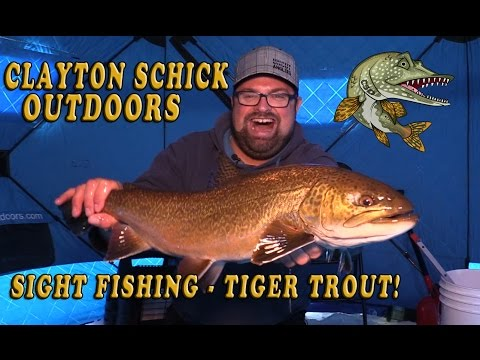Sight Fishing for Tiger Trout!