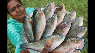Cooking Small Size PARROT FISH Gravy Recipe / Kerala Style Fish Curry Recipe / Food Money Food