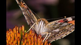 BUTTERFLY PHOTOGRAPHY - Tips And Tricks...Plus A Secret Revealed