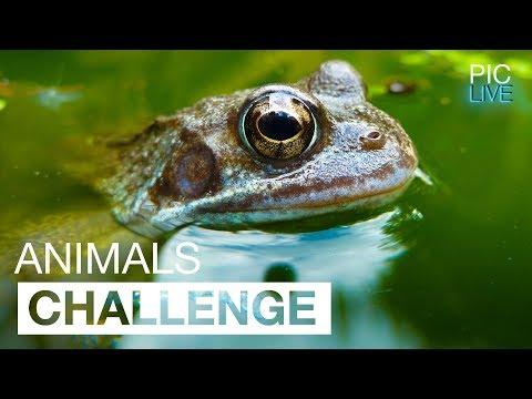 PIC LIVE - Challenge #3 - Animals