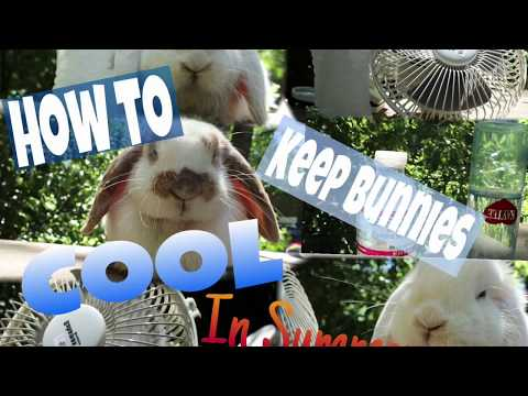 How To Keep Bunnies Cool In The Summer-