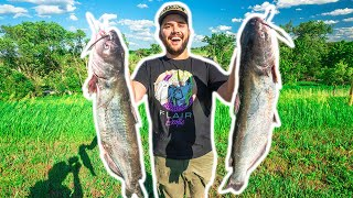 CUTBAIT River Catfishing CHALLENGE!!! (Catch Clean Cook)