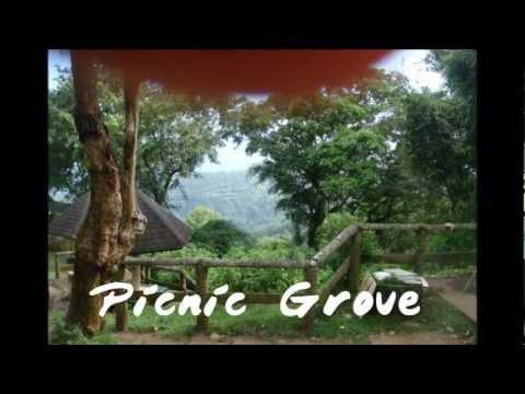 Tagaytay's Picnic Grove