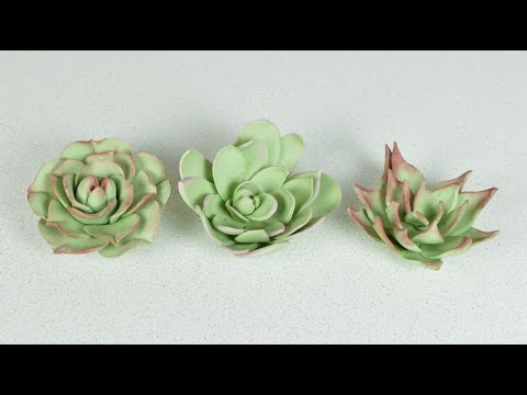 How to Make Sugar Succulent Flowers with Gumpaste / Flower Paste