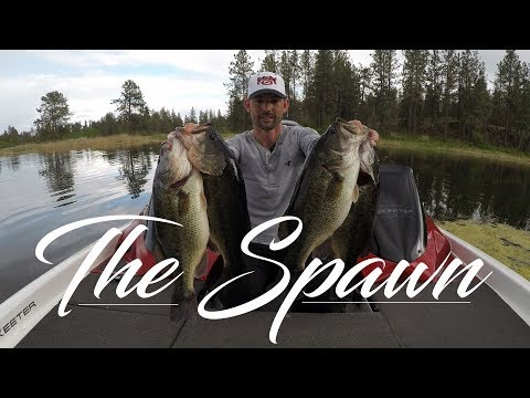 Hooking up in The Spawn [In-Depth Tips and Bass Behavior]