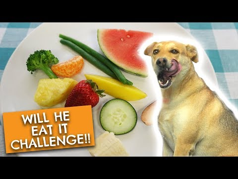 Dog Tries Fruits and Vegetables | Will He Eat It Challenge + Mukbang!