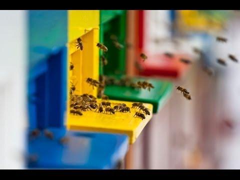 Saving Bees, One Yard at a Time