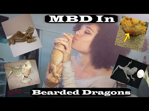 MBD In Bearded Dragons