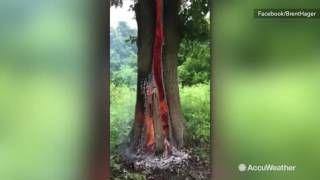 This is what happens after lightning hit this tree in Arkansas