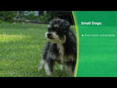 How to Choose the Right Puppy: Tips and Advice from Iams®