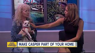 Nov. 18 Rescues in Action: Casper is a special treat