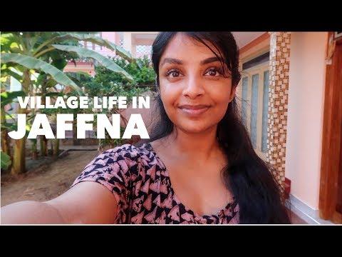 Xxx Mp4 Village Life In Jaffna Sri Lanka VLOG 3 Nivii06 3gp Sex