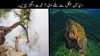 7 Most Amazing Things found In Forest Urdu   دنیا میں جنگل سے ملنے والی حیرت انگیز چیزیں   Haider Tv