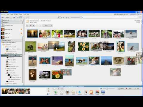 Arranging and Renaming Photos in Google Picasa