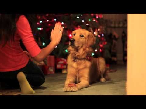 Dog Patiently Waiting for a Treat While Drooling -- The cutest video on YouTube.