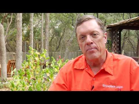 Lawn Care & Gardening Tips : Making Grass Greener