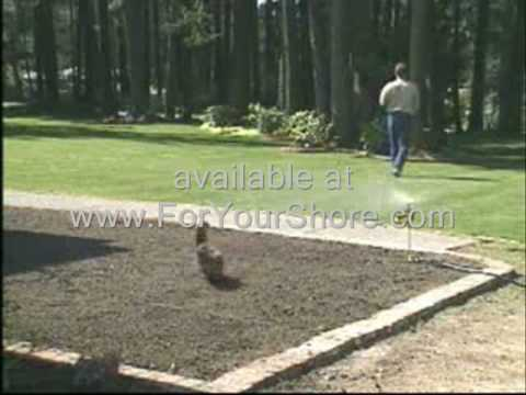 Goose Control how to do away with geese in your pond