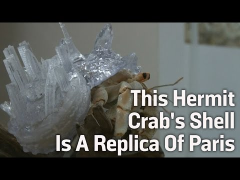 This Hermit Crab's Shell is a Replica Of Paris