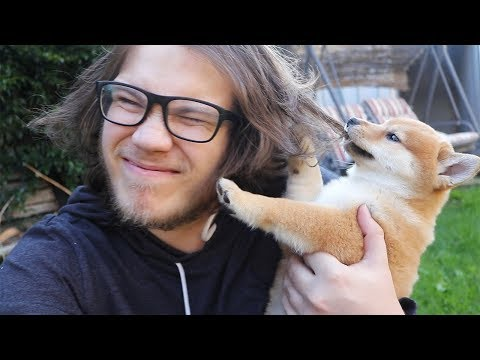 Bonding with my New Shiba Puppy