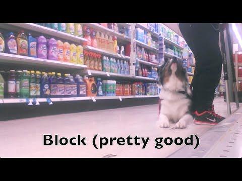 Block/Cover Training