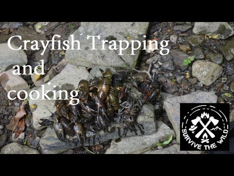 Crayfish trapping & cooking by the river