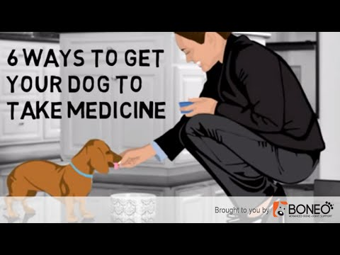 How to Get a Dog to Take a Pill or Tablet