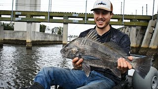 Kayak Fishing For Black Drum & Sheepshead Off Bridge Fenders