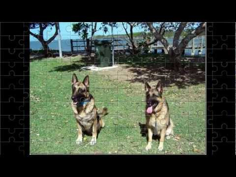 Piper from TV series Lightning Point German Shepherds Daughter shows Father how smart she is.