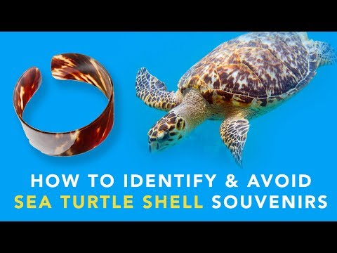 How To Identify & Avoid Sea Turtle Shell Souvenirs