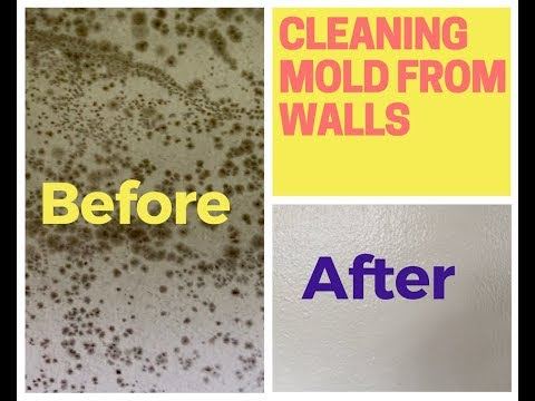 How To Remove Mold From Walls (Drywall)