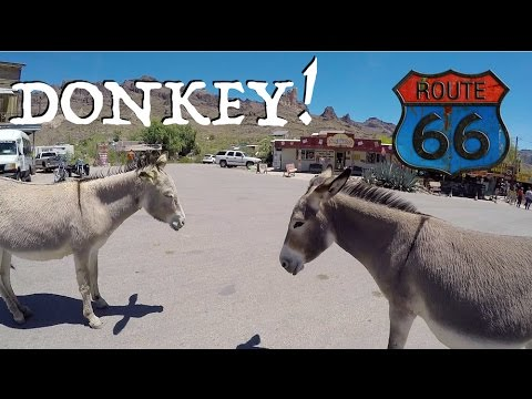 Arizona! ~ Dunking In Colorado River & Jackasses On Road