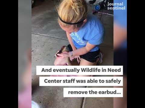 Pewaukee residents rescue Sandhill crane