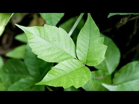 How to Avoid Poison Ivy & Poison Oak | Camping
