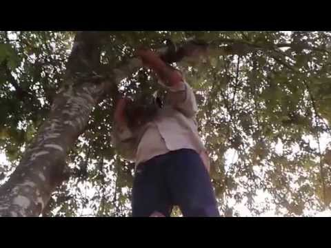 Swarm on tree;Luis Slayton Bee Removal and bee removal