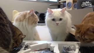 이런건 처음이애오! 레이싱 놀이에 난리가 난 고양이